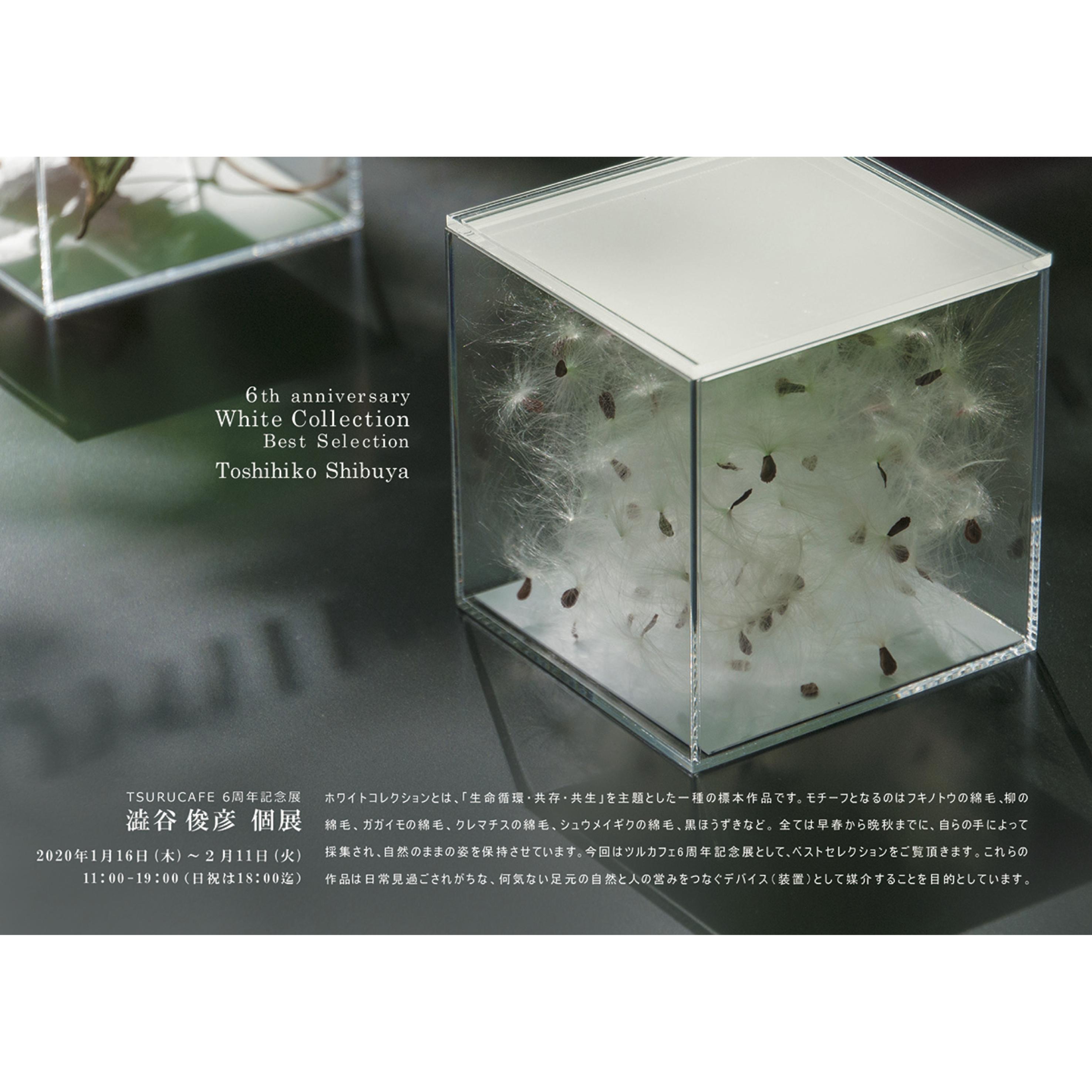 澁谷俊彦 個展『White Collection Best Selection』